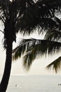 thailand-palmen-strand